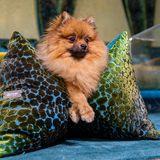 Gewinnspiel FLUM Manufaktur – das Hundekissen der Stars