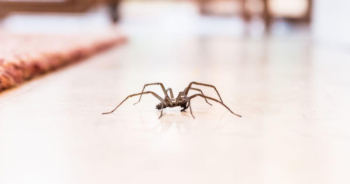 Schreckensmoment in China: Spinne nistet sich im Ohr einer Frau ein