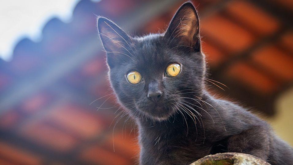 Hilflose Frau fällt in eine Schlucht, doch ihre Katze rettet ihr das Leben