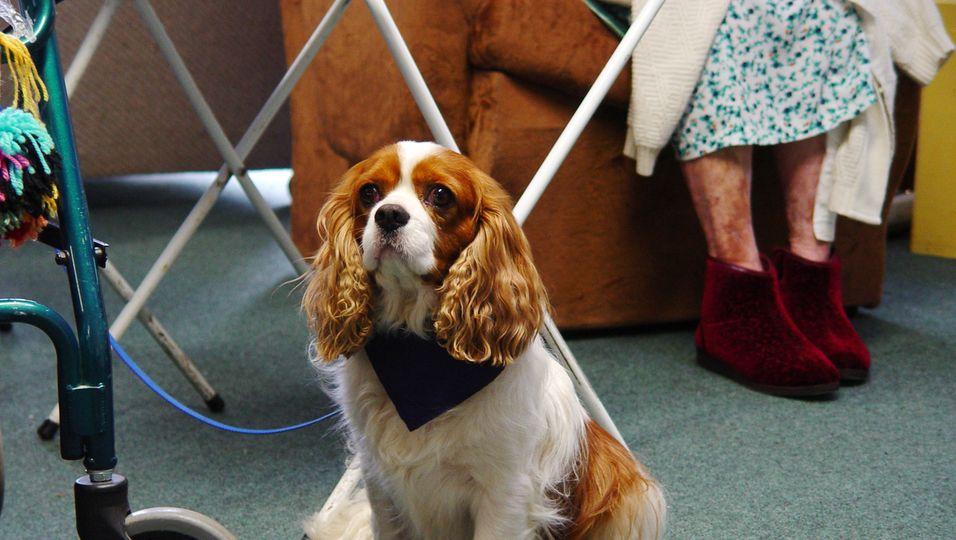 Rentnerin wird wegen Hund fristlos die Heimwohnung gekündigt.