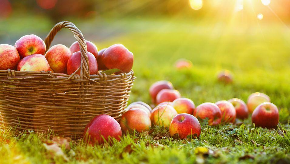 Äpfel - im Korb und auf der Wiese