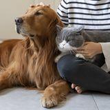 Umfrage_Haustiere