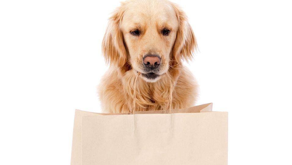 Hund bringt Einkauf