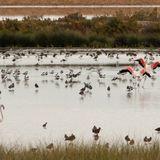 Coto de Doñana   Naturschönheit in Spanien