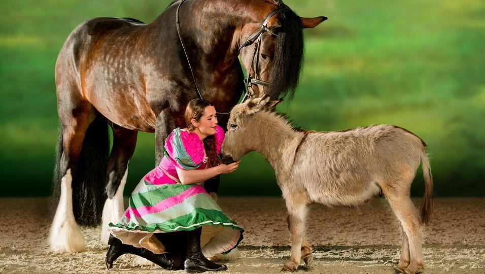 Zwischen den Extremen - der Miniesel neben der größten Pferderasse der Welt