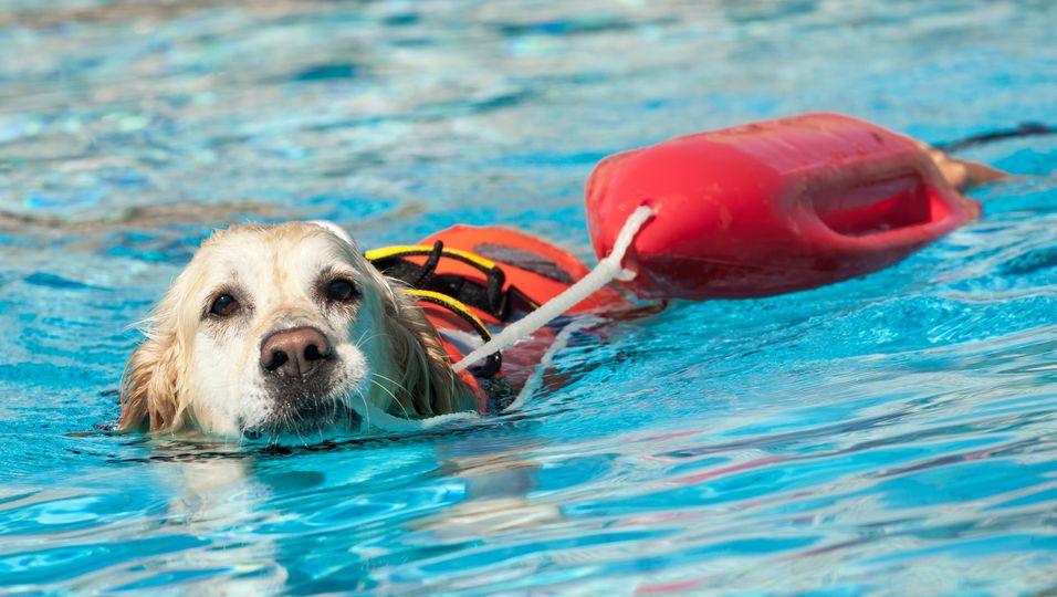 Nach Sturz in Fluss: Hund rettet Frau das Leben