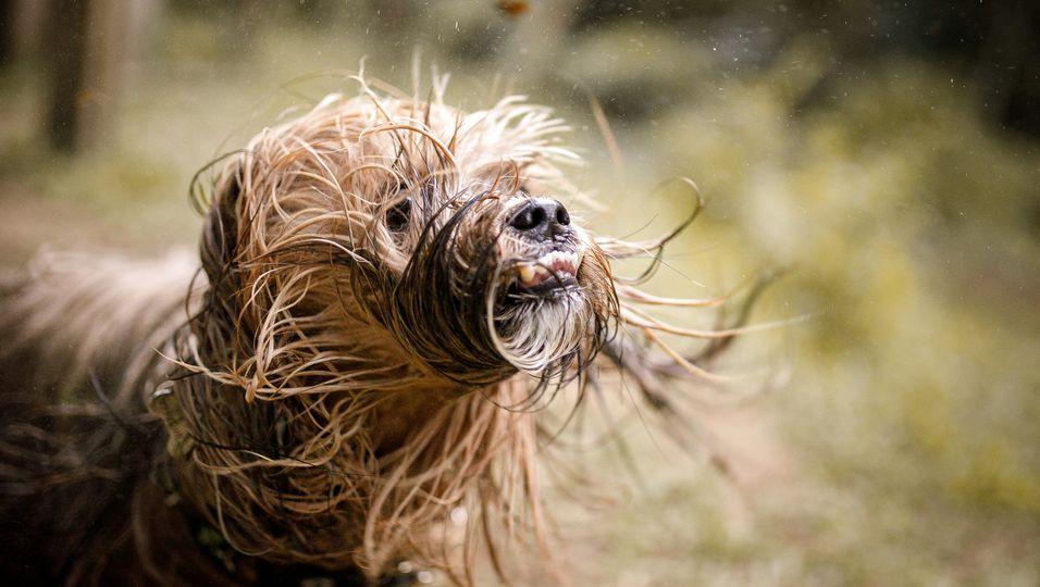 Horror-Hund oder optische Täuschung – tierischer Schnappschuss sorgt für Kopfzerbrechen