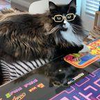 Optiker-Katze