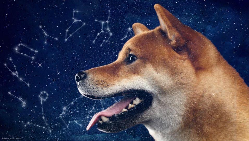Dein Sternzeichen verrät: Diese Hunderasse passt zu dir