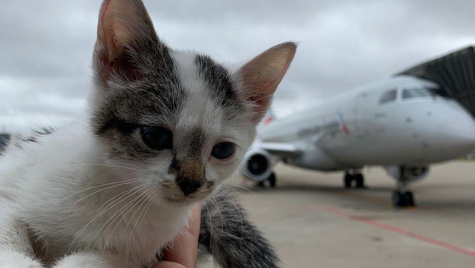 Flughafen-Katze