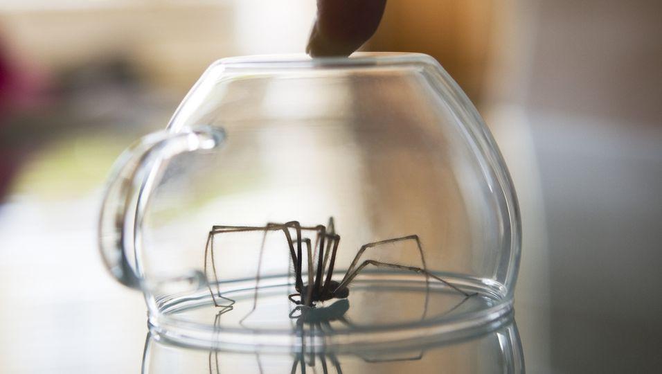 Gefangene Spinne