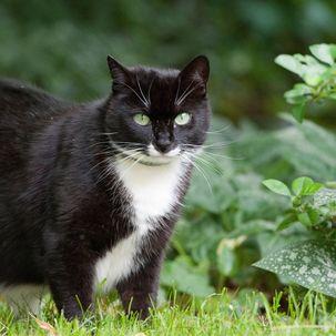 Damit Katzen unbeschadet auf Streifzug gehen können, sollten Halter im Garten einige gefährliche Stellen absichern.