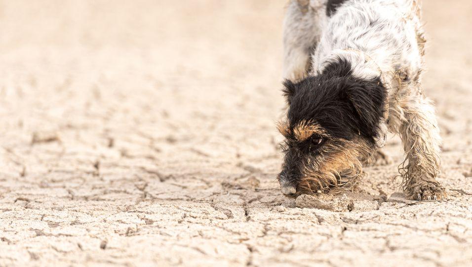 Ihr Vierbeiner musste fast sterben: Hundebesitzerin warnt vor Sandkolik