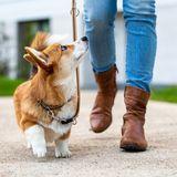 Hund beim Spazierengehen