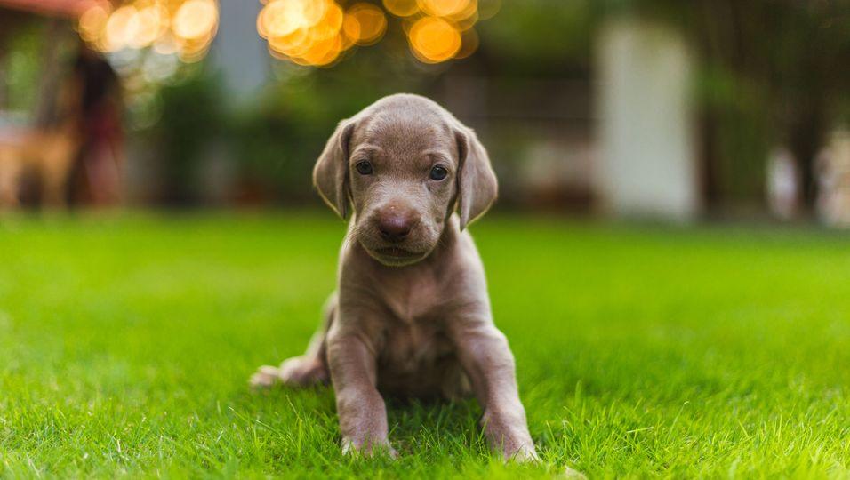 Tierisches Happy End: Er musste als Welpe fast sterben: Jetzt begeistert dieser Hund die ganze Welt