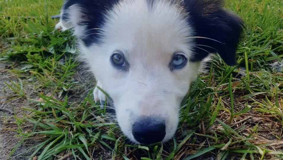 Hund stirbt an Algenvergiftung