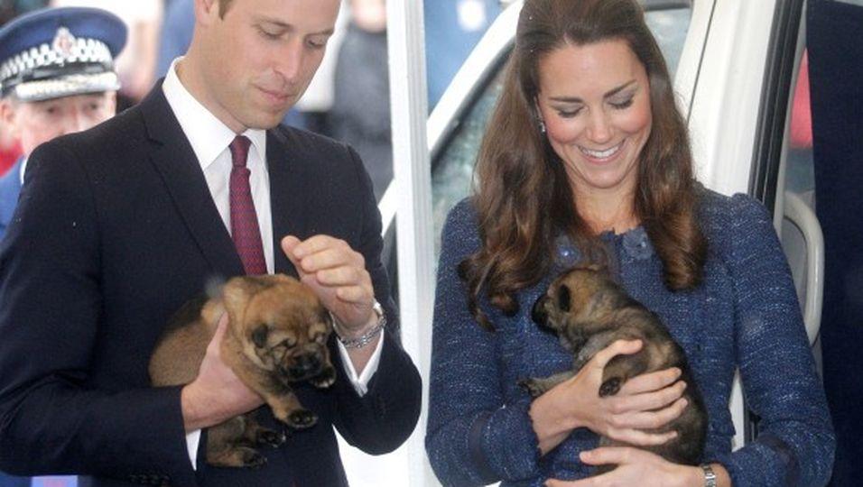 Royale Hundeliebe: So süß schmusen sie mit den Welpen!