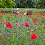 Älteres Paar auf Blumenwiese